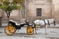Cathedral, Seville - Sevilla with Horse and Carriage, Spain