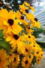 Flowers in Midtown Atlanta