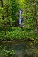 Oirase gorge in fresh green, Aomori, Japan