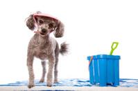 Beach Babe Doggy