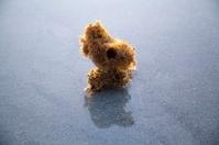 Natural Sponge at the Beach