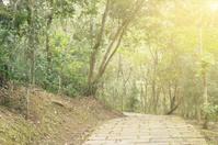 Path in forest under sunlight