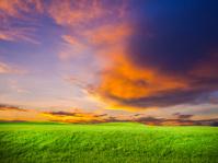 green grass and sun set