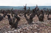 Vineyards in winter cloudy day. La Rioja, Spain