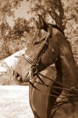 Ranch Portrait
