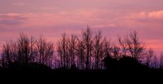 Winter Dawn Trees