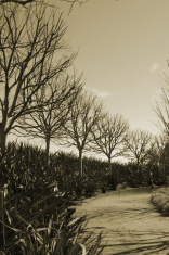 Creepy Tree Road Sepia
