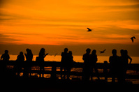 Silhouettes of people are watching seagulls at bangpu, Bangkok,T