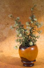 vase of clover
