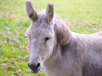 Winsome donkey