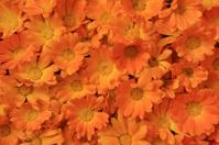 full frame of calendula flowers