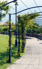 금속 Pergola 정원 아치 터널, 쳐진 사과 나무, Buxus 스톡 사진 ...