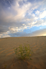 Sand dune at Great Sand Hills in scenic Saskatchewan