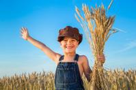 Boy on wheat field