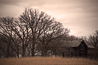 Bare Trees and Abandoned House