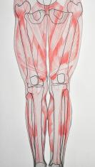 ANATOMY : human legs