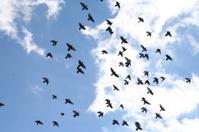 Blue Sky Of Birds.
