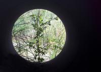 Round nature