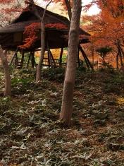 Hut and plants at Rikugien park