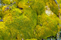 green moss grow on the rocks