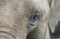 Elephant in Detail