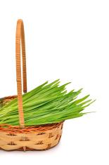 Fresh green grass in the wicker basket