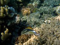 Underwater at Australia's Great Barrier Reef