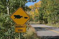 Marmot Xing