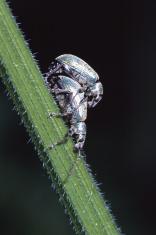Loving Beetles