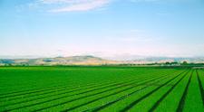 Tree Road Valley desert California.