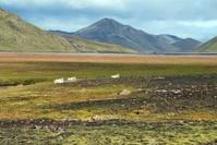 Landscape in Landmannalaugar,Iceland.