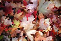 Autumn Dew