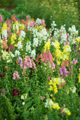 Garden Flowers Arrangement