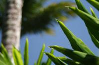 Tropical plant setting