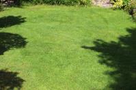 Shaded / shady fine lawn grass, freshly mown turf, lush green