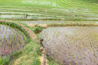 terraces rice field