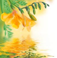 Spring yellow primrose