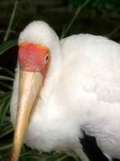 Exotic Bird.