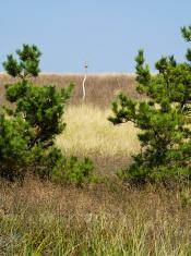 Birdhouse Between Pine Trees