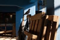Bird in the Shadows