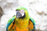 Macaw bird is standing