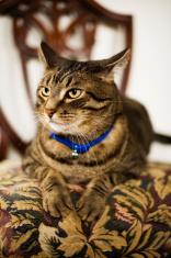 Chair Kitty