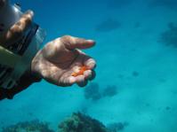 Underwater movie star