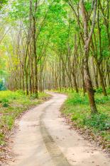 Forest road landscape close-up background