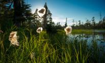 Beautiful field in Alaska