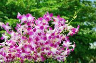 Nice violet orchid decoration