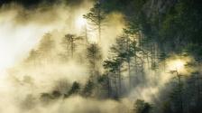 Secrets of old forest
