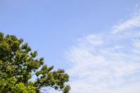 Blue sky and big tree