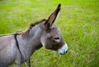 donkey head
