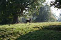 Wild Stag In Autumn Misty Lit Forest